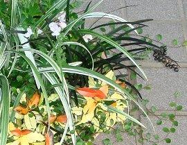 葉っぱだけの寄せ植え 2008-8-8