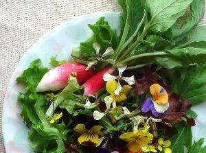 ルッコラ(ロケット)の花が入ったサラダ