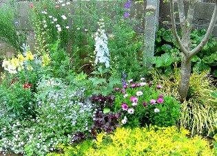 デルフィニュームのある庭