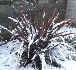 雪の日のニューサイラン 1-17