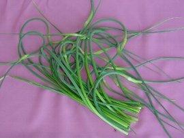 ニンニクの花茎