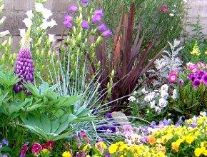 ニューサイランのある花壇 5-27