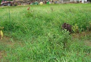 草茫々になった家庭菜園