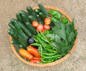 野菜の収穫 8-6