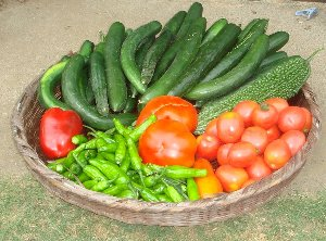 我家の菜園の夏野菜