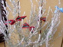 エレモフィラ・ニベアのツリー