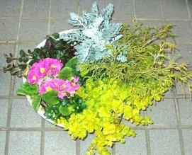 リシマキア ヌンムラリア・オーレアの寄せ植え