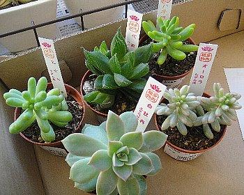 多肉植物②2012-10-14.jpg