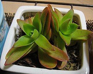 多肉植物⑥2012-10-14.jpg