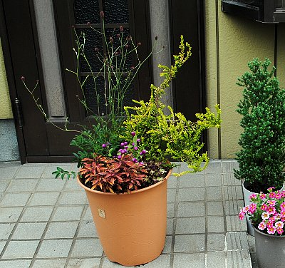 DSC_0015-2015-7-29-1.jpg