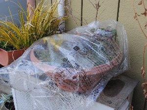 DSC_0037庭のこぼれタネ-2013-1-13-1.jpg