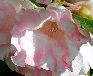 DSC_0060-2012-9-15-2.jpg
