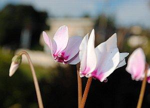 DSC_0126-2012-10-13-1.jpg