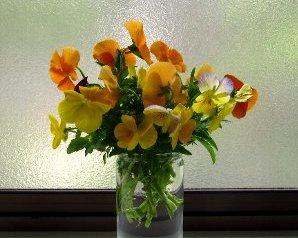 IMG_2008-5-31-2.jpg