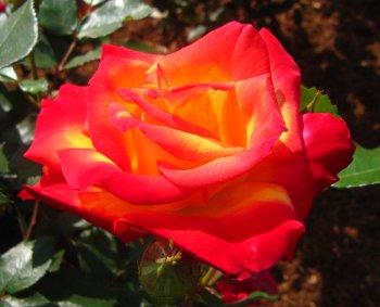 IMG_4410千葉の公園チャールストン-2012-5-14-1.jpg