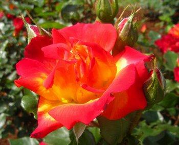 IMG_4411千葉の公園チャールストン-2012-5-14-1.jpg