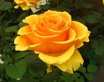 IMG_4596インドラ-2012-5-14-2.jpg