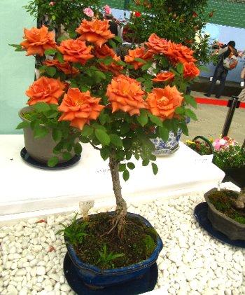 IMG_4630ソアレ-2012-5-14-1.jpg