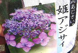 IMG_5119-5-25-1.jpg