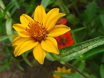 IMG_5238-2011-8-5-1.jpg