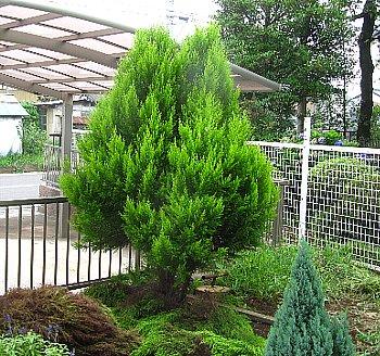 IMG_5283-2011-8-7-1.jpg