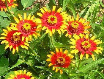 IMG_6260-2011-9-10-2.jpg