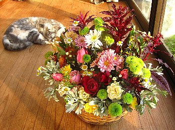 IMG_9762-2011-11-23-1.jpg
